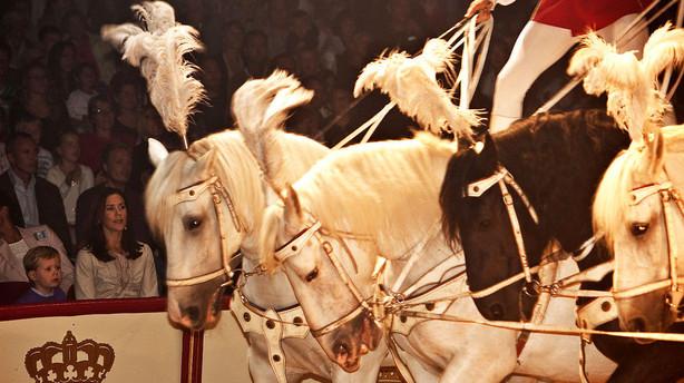 S�skende samler penge sammen og undg�r konkurs i Cirkus Dannebrog
