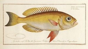 Fisketegninger landet for over 300.000 kr