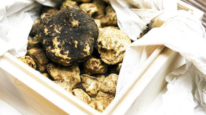 Dansk tr�ffel fundet under v�ltet tr�