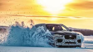 Jaguaren der fl�nser l�s med alle fire poter