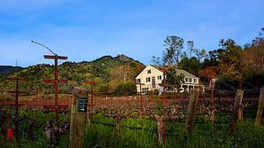 Ukendt vinhus med investor-potentiale