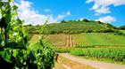 Tre Alsace-vine der holder hele vejen