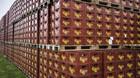 Aktier: Carlsberg og Genmab topper gr�nt marked