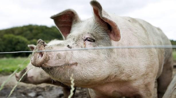 Stadigt mere dansk landbrugsjord er økologisk