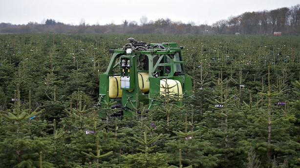 DF vil lade juletræer vokse tættere på gravhøje