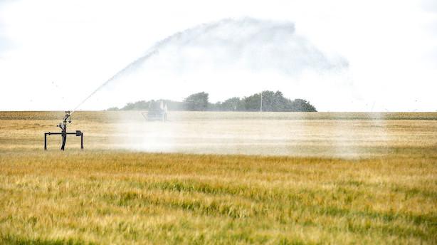 """DMI: Usædvanligt tør april skaber """"høj risiko for tørke"""""""