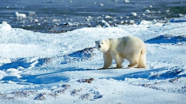 Rusland gør krav på samme del af Arktis som Danmark