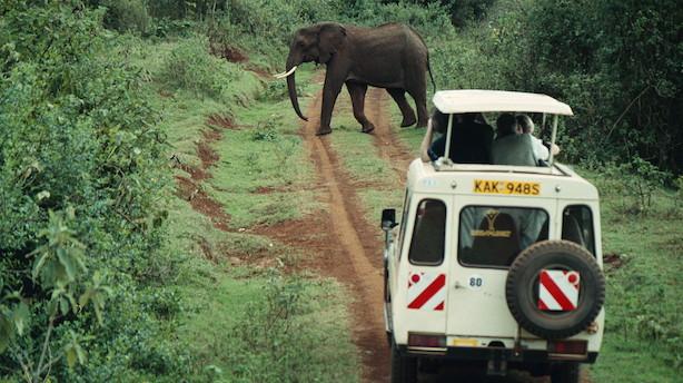 Disse ti afrikanske lande vil få gavn af stigende kinesisk turisme
