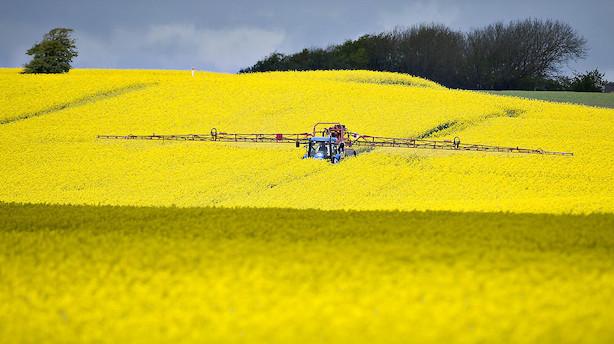 Landmændenes indtjening stiger 7 mia kr i år