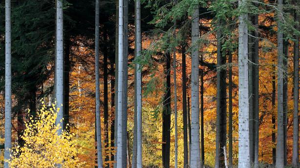 Danske skove har det ringe og er blevet mørkere