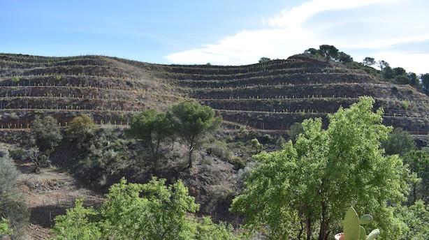 Danskere laver saftig rødvin i spansk vinkollektiv