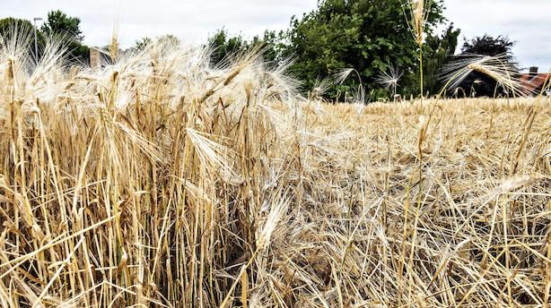Højtryks farvel åbner for regn og blæst i hele Danmark
