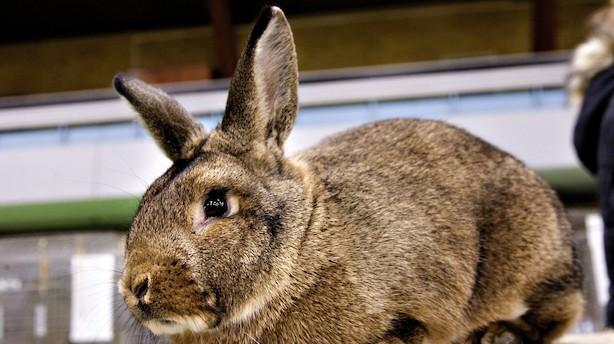 kaniner i danmark