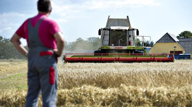 Økonom: Lad de gældsramte landbrug dø