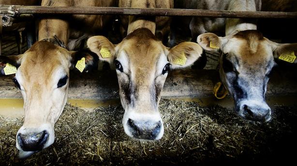 Bæredygtighed styrker mia-koncern: Grovvareselskab overtager nichefirma, som fodrer grise og kvæg med slik, kiks og kager