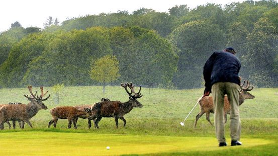 Ansigtsløft til en 81-årig golfklassiker