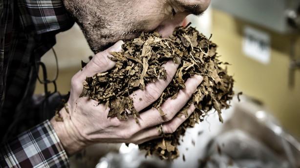 Dansk tobakskæmpe køber hollandsk cigarfirma for 1,5 mia kr