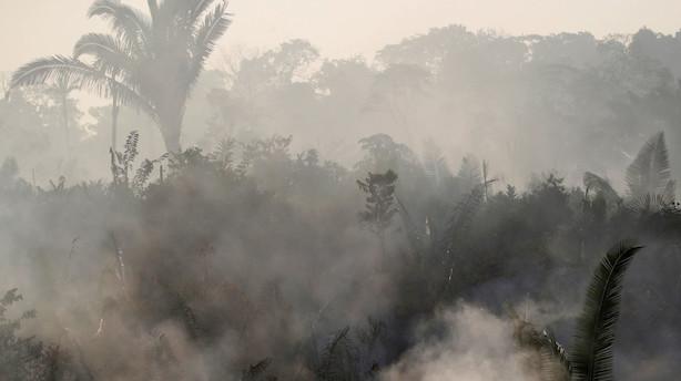 Verdensnaturfonden: Tab i Amazonas er enestående stort