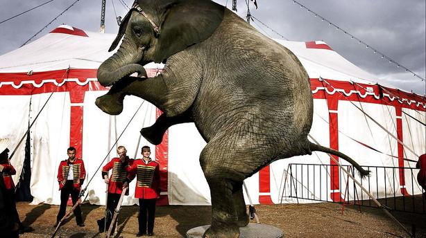 Cirkus Dannebrog er gået konkurs