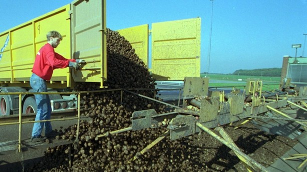 Gylden forretning: Sælger kartoffelmel for 1,5 mia kr