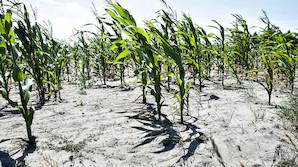 5a4f44111e5bc1 ... Landbruget i stærk appel til regeringen efter tørkekrise  Fjern  jordskatten ...