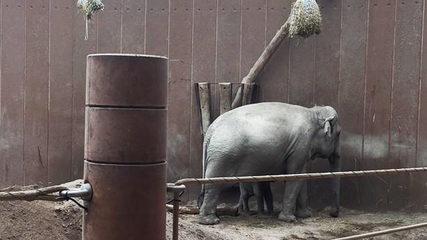 Den moderne medarbejder anno 2017 er at finde i Zoo