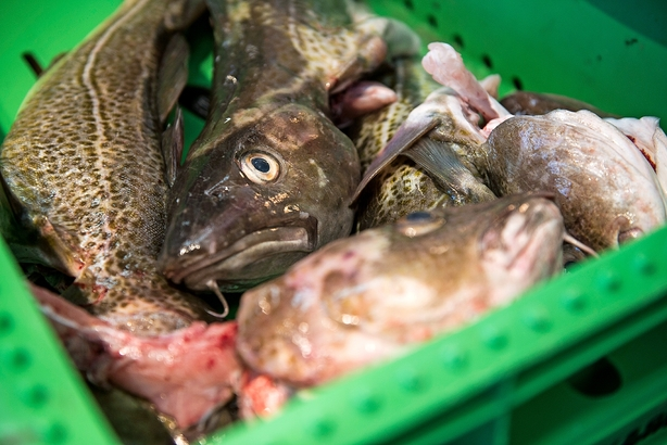 Debat: Slinger i DF's fiskeripolitik