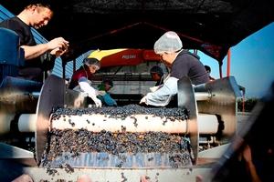 Vine fra Chile der smager af mere end de koster