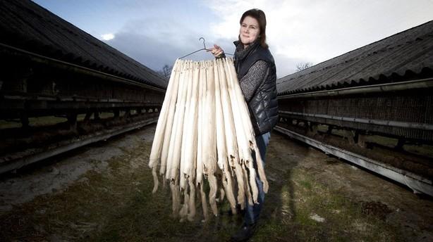 Danske minkfarmere rykker fra alle konkurrenterne