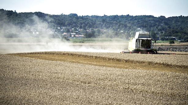 Kronik; Sådan gør vi dansk landbrug grønnere