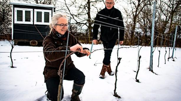 Droppede chefstillinger i finansverdenen for at lave vin