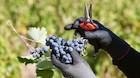 Vine til under 100 kr: De franske og en enkelt chilener imponerer
