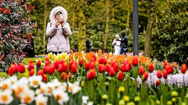 Forår i Europa: Lagerøl i London og tulipanfest i Blomsternes By