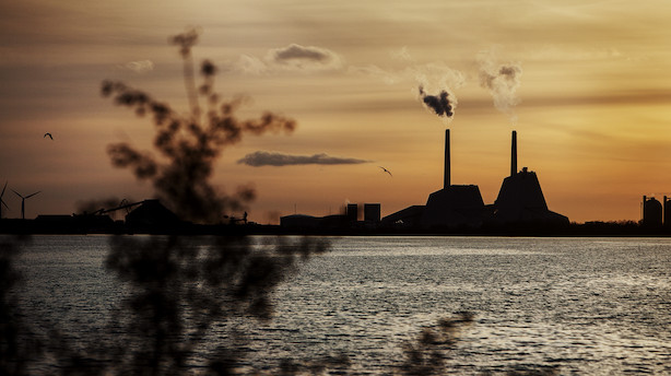 Kronik: Klimaråd skaber forvirring om biomasse