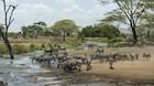 Mellem liv og død på savannen