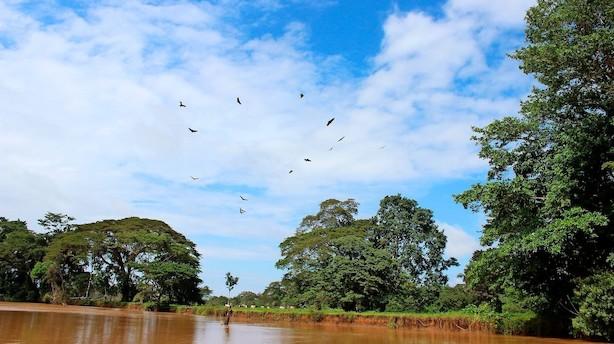 Blandt fuglefløjt og abekattestreger i den våde jungle