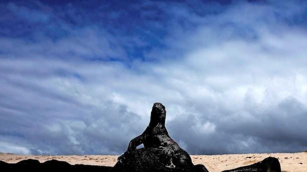 Så vildt er det at stå ansigt til ansigt med Galapagos' vilde dyr