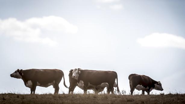Landbrug & Fødevarer: Hvorfor anerkender Greenpeace ikke Det Miljøøkonomiske Råd?