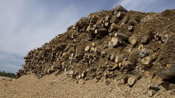 Debat: Øg importen på træflis, alternativet er langt værre