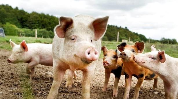 Debat: Greenpeace underkender landbrugets klimaindsats