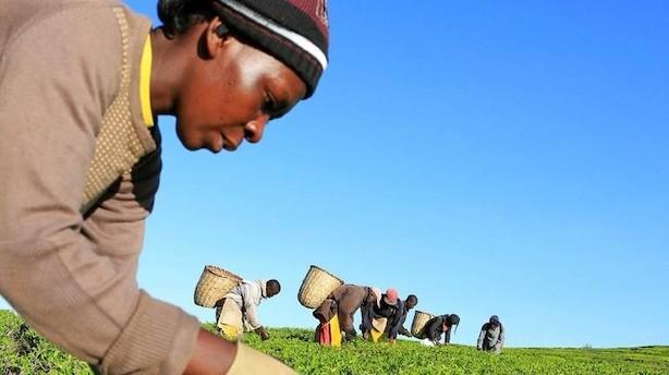 Kronik: Klimaforandringerne rammer fra Nordjylland til Nairobi og kræver fælles handling nu