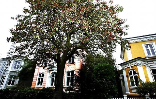 Guide til rundtossede  boligejere