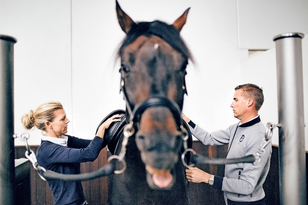 """""""Jeg får besøg af en rig russer i dag, som forhåbentlig vil købe en hest"""""""