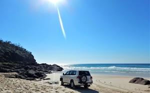 Husk dingo-kæppen når du besøger Fraser Island