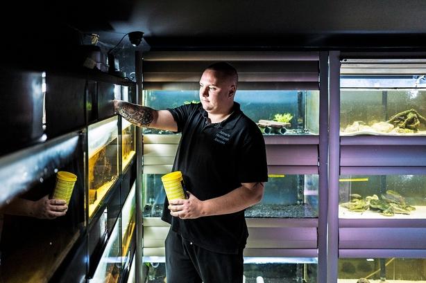 Anders og Chris startede akvariebutik som iværksætterselskab: Nu er flertal klar til at afskaffe dem i et opgør mod massiv svindel