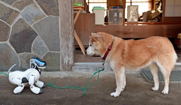 Børsen mener: Robotten er menneskets næstbedste ven